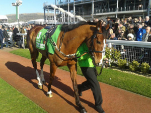 Looking a champion Faugheen before the race. Image credit @tdthurgood